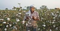 उद्योग ने की कपास उत्पादन अनुमान में 4.75 लाख गांठ की कटौती