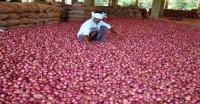 प्याज निकाल रहा है किसानों के आंसू, कई मंडियों में भाव 2-3 रुपये तक रह गए