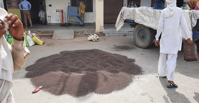 हरियाणा की मंडियों में आज से सरसों की खरीद शुरू कर दी गई है। फसल खरीद में कोरोना वायरस से बचाव के उपायों और सोशल डिसटेंसिंग के साथ सभी एहतियात बरतने का अनुपालन किया जा रहा है