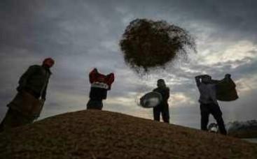 खेती के बिजनेस में रिलायंस, किसानों से चावल खरीद की हुई डील