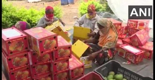 कर्नाटक के गडग के आम किसानों का कहना है कि कोरोना वायरस की वजह से हुए लॉकडाउन के कारण उन्हें भारी नुकसान हो रहा है। लॉकडाउन के कारण आम का निर्यात नहीं हो पा रहा इसलिए नजदीक के बाजार बेचने की कोशिश कर रहे हैं