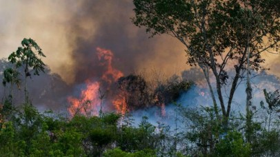 'धरती के फेफड़ों' में लगी आग क्यों है पूरी दुनिया के लिए चिंता का विषय