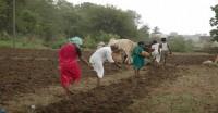 गुजरात, उत्तर प्रदेश, झारखंड में मानसूनी बारिश कम, किसानों की चिंता बढ़ी