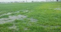 मौसम विभाग के अनुसार पंजाब में तेज बारिश की चेतावनी, राज्य में सेना अलर्ट