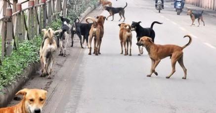 केरल में आवारा कुत्तों को मारने के लिए सोने के सिक्के