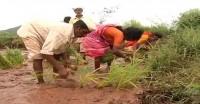 किसानों की मांगों को लेकर 12 नवंबर को मुंबई में जुटेंगे विपक्षी दल