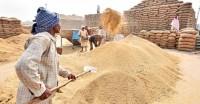 खरीफ में 370 लाख टन चावल की खरीद का लक्ष्य, पिछले साल से 11.56 लाख टन कम