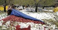 जम्मू-कश्मीर : बेमौसम बर्फबारी को विशेष प्राकृतिक आपदा घोषित किया, किसानों को मिलेगी सहायता