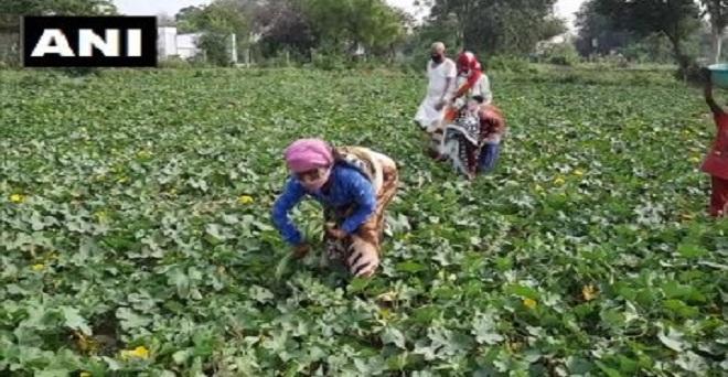 किसानों के लिए अच्छी खबर : अलीगढ़ के किसान केदारी ने बताया कि कोरोना वायरस महामारी के बीच लोग अपनी रोग प्रतिरोधक क्षमता बढ़ाने के लिए हरी सब्ज़ियां खाना पसंद कर रहे हैं, जिससे इनकी मांग बढ़ी है।