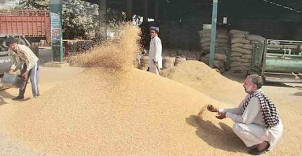 लागत से 345 रुपये नीचे भाव पर गेहूं बेच रही है सरकार, अगले महीने से बढ़ेंगे भाव