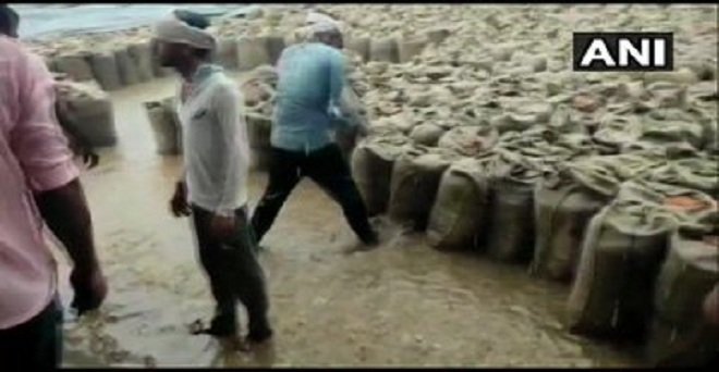 मध्य प्रदेश के शिवपुरी में बारिश की वजह से खुले में रखा अनाज भीग गया