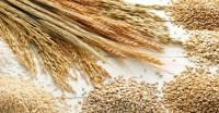 नई कृषि निर्यात नीति लायेंगी केंद्र सरकार, कृषि जिंसों का निर्यात बढ़ाने का है मकसद