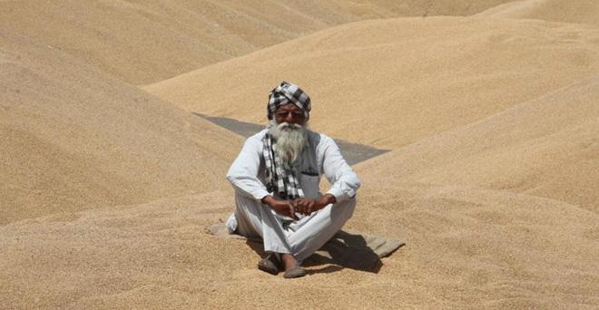मंडी में गेहूं बेचने आया किसान, अपनी बारी के इंतजार में