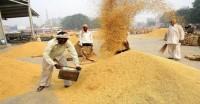 धान की सरकारी खरीद 196 लाख टन के पार