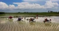 खेती-किसानी को होगा फायदा, मानसून सामान्य रहने का अनुमान-मौसम विभाग