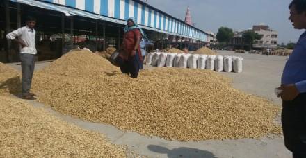 गुजरात में मूंगफली खरीद घोटाले पर राजनीति तेज, नेफेड ने की थ्ाी 9.5 लाख टन की खरीद