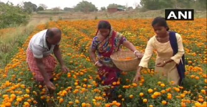 छत्तीसगढ़ के बलरामपुर में फूल उगाने वाले किसानों का कहना है कि उन्हें लॉकडाउन के कारण भारी नुकसान हो रहा है, लॉकडाउन की वजह से फूलों की मांग नहीं आ रही है जिस कारण फूलों को तोड़ कर फेंकना पड़ रहा है।