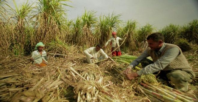 उत्तर प्रदेश की चीनी मिलों पर गन्ना किसानों का बकाया 5,800 करोड़ के पार पहुंचा