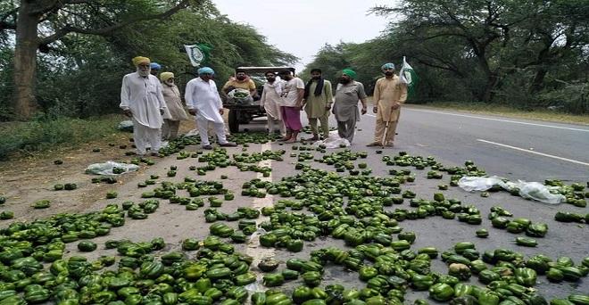 लॉकडाउन के कारण सब्जियों की मांग में भारी कमी आई है, पंजाब के किसानों को शिमला मिर्च का भाव तीन रुपये प्रति किलो भी नहीं मिल पा रहा है, जिस कारण परेशान होकर सड़क पर फैंकने को मजबूर हैं।