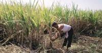 गन्ना किसानों के रिकार्ड बकाया भुगतान के हल हेतु मंत्री समूह का गठन
