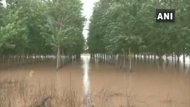 पंजाब के जालंधर में भारी वर्षा के बाद फिल्लौर के 7 गांवों में बाढ़ जैसी स्थिति बन गई है