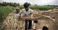 ब्राजील का आरोप, भारत और पाकिस्तान गन्ना किसानों को दे रहे हैं भारी सब्सिडी