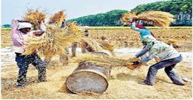 पंजाब, हरियाणा और उत्तर प्रदेश खरीफ की प्रमुख फसल धान की झड़ाई का कार्य जोरों पर है