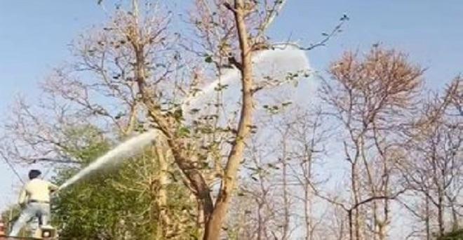 मध्य प्रदेश में टिड्डी दलों से फसलों को बचाने के लिए कीटनाशकों का छिड़काव करते हुए, राजस्थान के साथ मध्य प्रदेश के कई जिलों में टिड्डियों के हमले से फसलों के साथ ही सब्जियों और फलों को भारी नुकसान हो रहा है