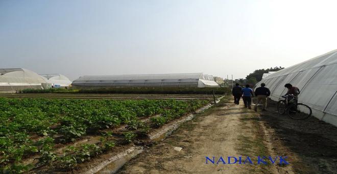 किसान ग्रीन हाउस में सब्जियों की खेती करके, ज्यादा उत्पादन ले रहे हैं