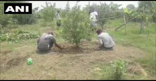 उत्तर प्रदेश: प्रयागराज के रुद्र प्रताप सिंह ने ठंडी जगहों पर लगने वाले सेब को प्रयागराज में उगाकर सबको हैरान कर दिया है। उन्होंने ग्राफ्टिंग तकनीक से सेब के 17 पेड़ लगाए थे, जिनमें से 14 फल देने लगे हैं।