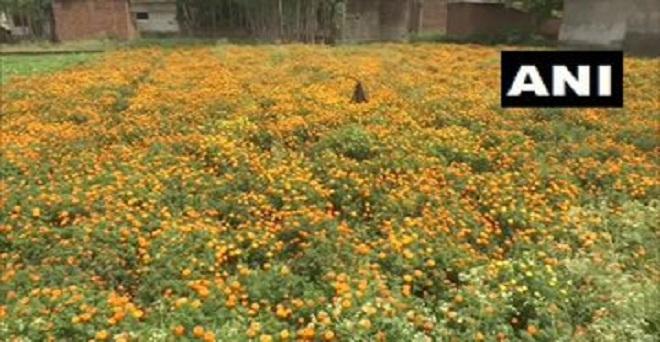 लॉकडाउन के कारण फूलों की बिक्री नहीं हो रही है, अत: लखनऊ में किसानों को फूल फेंकने पड़ रहे हैं जिससे उन्हें भारी नुकसान हो रहा है
