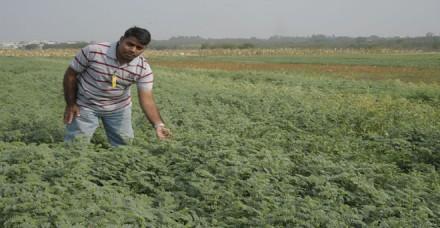 चना के आयात शुल्क में फिर बढ़ोतरी, क्या किसानों को मिल पायेगा उचित भाव
