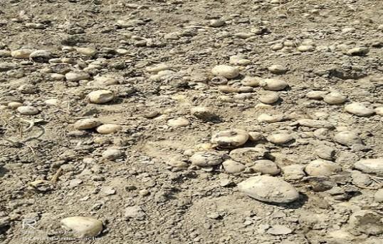 बेमौसम बारशि और ओलावृष्टि से आलू की फसल को भारी नुकसान हुआ है, किसानों के अनुसार लाख कोशिश करने की बाद भी सर्वे नहीं हुआ, लगभग 40 फीसदी आलू खेत में सड़ गया।