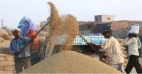 धान की सरकारी खरीद 179 लाख टन के पार, कुल खरीद में पंजाब की हिस्सेदारी ज्यादा