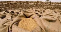 तिमाही आधार पर गेहूं के भाव 25 रुपये बढ़ायेगी सरकार, जुलाई-सितंबर के लिए 1,900 रुपये का भाव तय