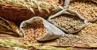 खरीफ में 9.8 करोड़ टन चावल उत्पादन का अनुमान, गेहूं उत्पादन का लक्ष्य 10 करोड़ टन