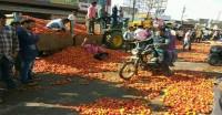 कीमतों में आई भारी गिरावट से टमाटर किसान हलकान, सड़क पर फेकने को मजबूर