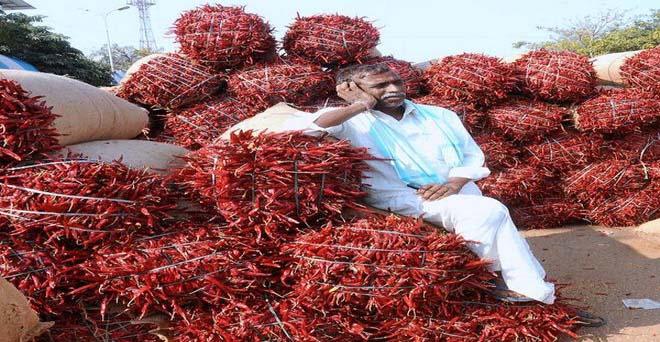 लालमिर्च का किसान मंडी में अपनी फसल बिकने की बारी का इंतजार करते हुए