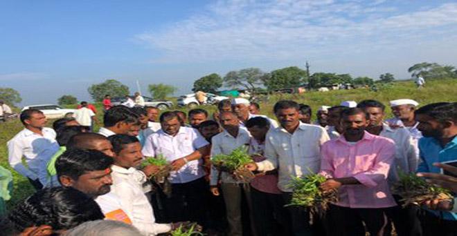 महाराष्ट्र के औंरगाबाद में बेमौसम बारिश से मक्का की फसल खेतों में गिर गई है। साथ ही लगातार हो रही बारिश से मक्का के दाने उग आए हैं, जिससे किसानों को भारी नुकसान हुआ है