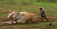 किसानों की हड़ताल 'गांव बंद' को ट्विटर पर ट्रेंड कराने में जुटे युवा किसान
