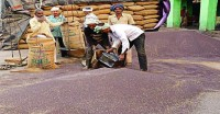 नेफेड से राजस्थान के किसानों के बकाया 3200 करोड़ रुपये के भुगतान की मांग