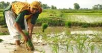 खरीफ फसलों की बुवाई 10 फीसदी पिछड़ी, देशभर में मानसूनी बारिश 6 फीसदी कम