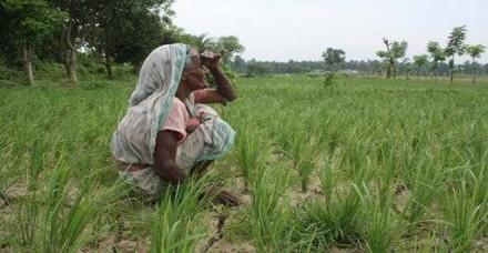 आधे से ज्यादा गुजरात सूखे की चपेट में, खरीफ फसलों की बुवाई भी पिछड़ी