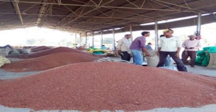 एमएसपी नहीं मिलने से महाराष्ट्र के अरहर किसानों को 1,125 करोड़ का घाटा