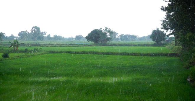 आज उत्तर भारत के कई राज्यों में हुई बारिश से गेहूं की फसल को होगा फायदा