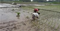 उत्तर भारत में अगले दो-तीन दिनों में बारिश की उम्मीद, यूपी में अभी तक सामान्य से 49 फीसदी कम