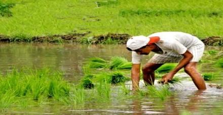पीएम-किसान योजना में लाभार्थी स्वयं कर सकेगा रजिस्ट्रेशन