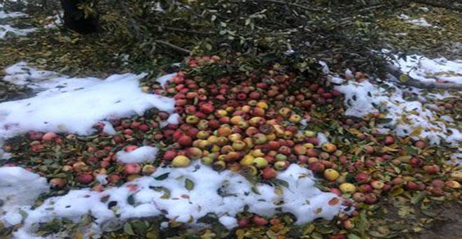 जम्मू-कश्मीर में बेमौसम बर्फबारी से सेब की फसल को हुआ भारी नुकसान