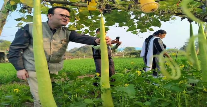 मध्य प्रदेश इंदौर के ग्राम गारी पिपलिया में देसी बीज की लोकी की लंबाई करीब 5 फुट है फिर भी हम लोग हाइब्रिड और जीएम की तरफ जा रहे हैं, हमें देसी बीजो का संरक्षण और रिसर्च करना चाहिए।