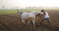 किसानों की आय सुनिश्चित करने हेतु साहसिक कदम उठाने की जरुरत, कृषि आय सालाना 6 फीसदी घटी